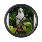 Galapagos Islands Red Footed Large Wall Clock