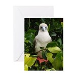 Galapagos Islands Red Footed Greeting Card