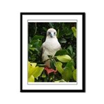 Galapagos Islands Red Footed Framed Panel Print
