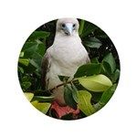 """Galapagos Islands Red Footed 3.5"""" Button (100 pack"""
