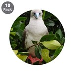 """Galapagos Islands Red Footed 3.5"""" Button (10 pack)"""