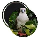 """Galapagos Islands Red Footed 2.25"""" Magnet (10 pack"""