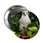 """Galapagos Islands Red Footed 2.25"""" Button"""