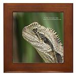 Australian Lizard Framed Tile