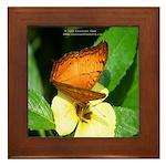 Butterfly 2 Framed Tile