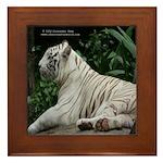 White tiger Framed Tile