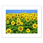Sunflower Cluster Small Poster