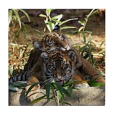 Sumatran Tigers Tile Coaster