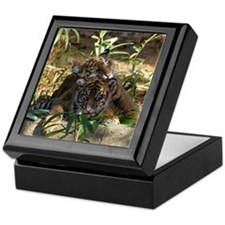Sumatran Tigers Keepsake Box