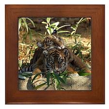 Sumatran Tigers Framed Tile