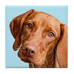 Vizsla Portrait Tile Coaster