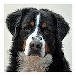 "Bernese Mountain Dog Square Car Magnet 3"" x 3"""