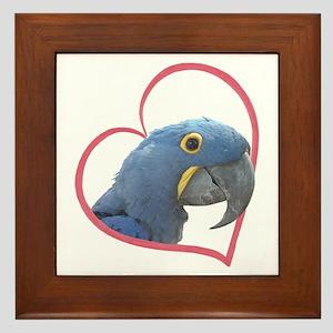 Hyacinth Macaw Heartline Framed Tile