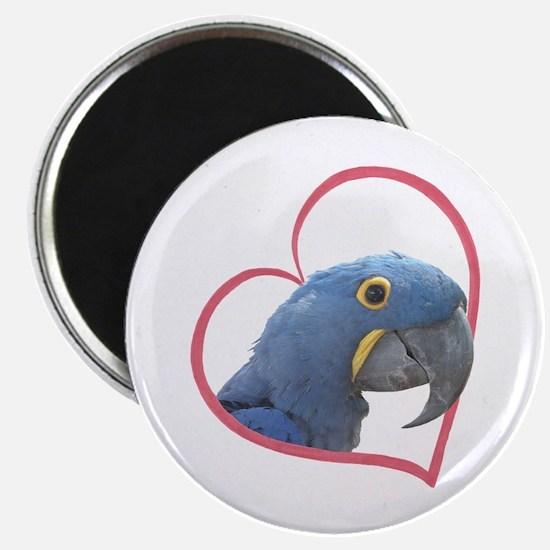"Hyacinth Macaw Heartline 2.25"" Magnet (10 pack)"