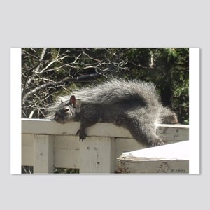 Bum Squirrel Postcards (Package of 8)