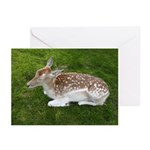 Fawn Greeting Cards (Pk of 10)