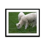 Lambs Framed Panel Print