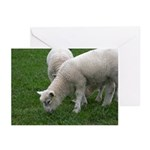 Lambs Greeting Cards (Pk of 10)