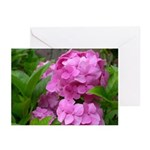 Hydrangea Greeting Cards (Pk of 10)