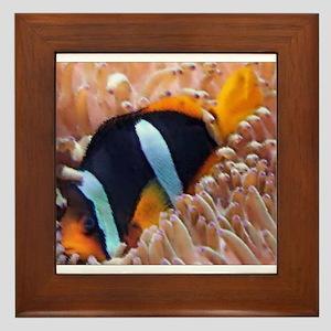 Clown Fish 2 Framed Tile