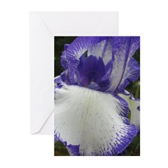 Iris Storm Greeting Cards (Pk of 20)
