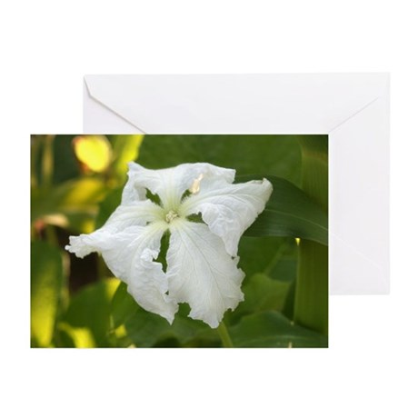 White Squash Flower Greeting Cards (Pk of 20)
