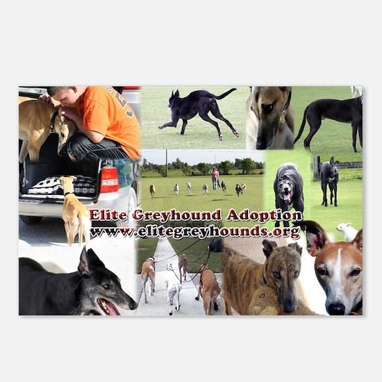 Elite Greyhound Adoption Postcards (Package of 8)