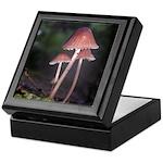 Tiny Forest Mushrooms on a Log Keepsake Box