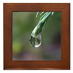 Raindrop on a Redwood Leaf Framed Tile