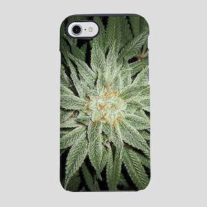 Cannabis Plant iPhone 7 Tough Case