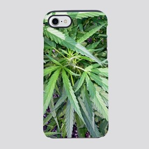 Cannabis Sativa Plant iPhone 7 Tough Case