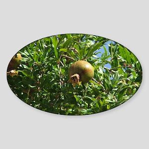Pomegranite Early Fruit Oval Sticker