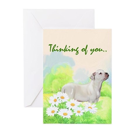 American bulldog Sympathy Greeting Cards (Pk of 10