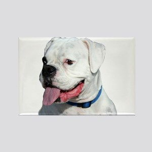 White Boxer Rectangle Magnet