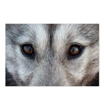 WolF Pup Postcards Sled Dog Postcards Pack of 8