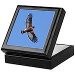 Red-shouldered Hawk Keepsake Box