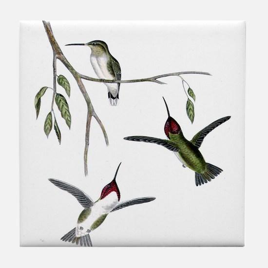 Costa's Hummingbird Tile Coaster