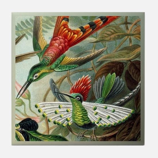 Tufted Coquette Hummingbird Tile Coaster