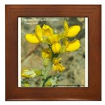 Framed Tile with Yellow Pea or False Lupine