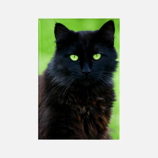 Beautiful Black Cat Rectangle Magnet