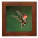 Male Hummingbird Flying Framed Tile