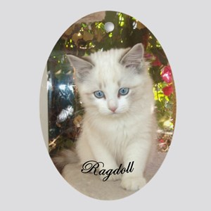 Cute Ragdoll Kitten Oval Ornament