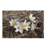 White Parnasus Postcards (package Of 8)