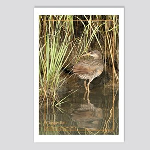 Clapper Rail Postcards (Package of 8)