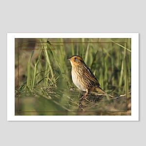 Saltmarsh sharp-tailed Sparrow Postcards (Pk of 8)