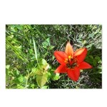 Wild Tiger Lily Postcards (package Of 8)