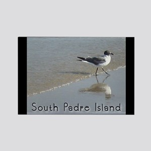 South Padre Island, TX seagul Rectangle Magnet