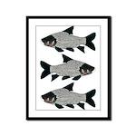 Giant carp barb Framed Panel Print