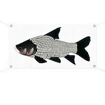 Giant carp barb Banner