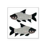 Giant carp barb Sticker